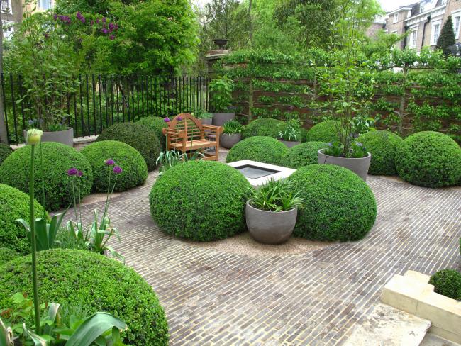 Круглые кусты в ландшафтном дизайне