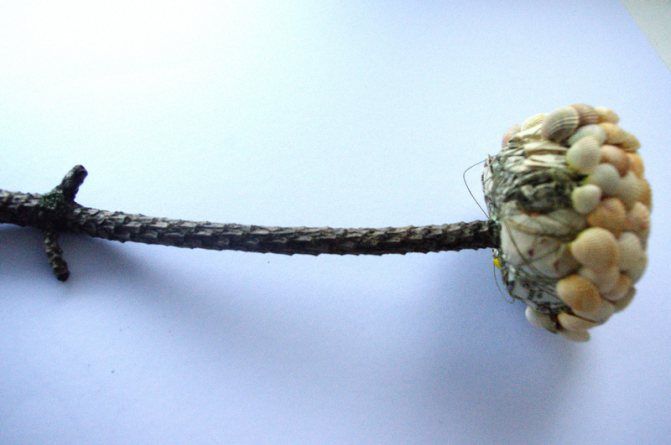 Топиарии из ракушек и камней: мастер-класс с пошаговыми фото